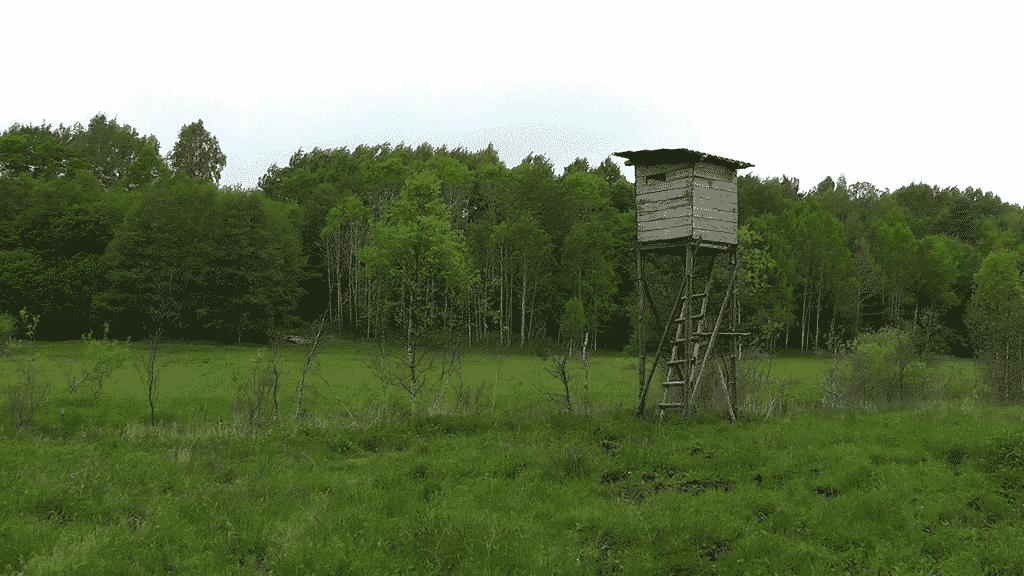 LB jagtrejser - bukkejagt i Polen