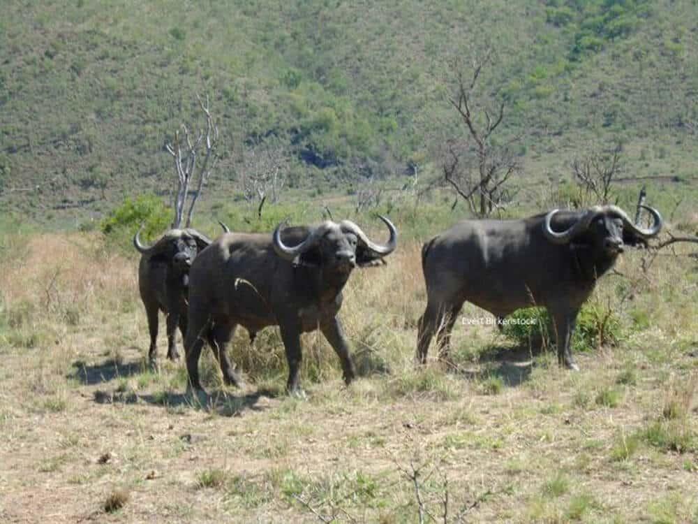 Jagt i Sydafrika - LB jagtrejse