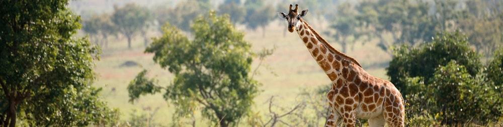 Jagt og jagtrejser - Polen, Sydafrika, Afrika